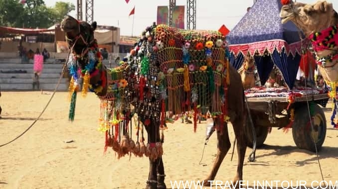 Pushkar Camel Festival min - 7 Famous Fairs and Festivals Of Rajasthan, India