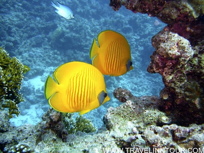 Lily Beach Resort And Spa- Underwater Life