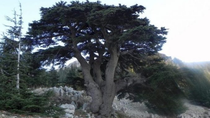 The Cedars of God Al Barouk Cedar Forest Lebanon e1546966210715 678x381 - Lebanon Travel Guide - A Week Long Road Trip