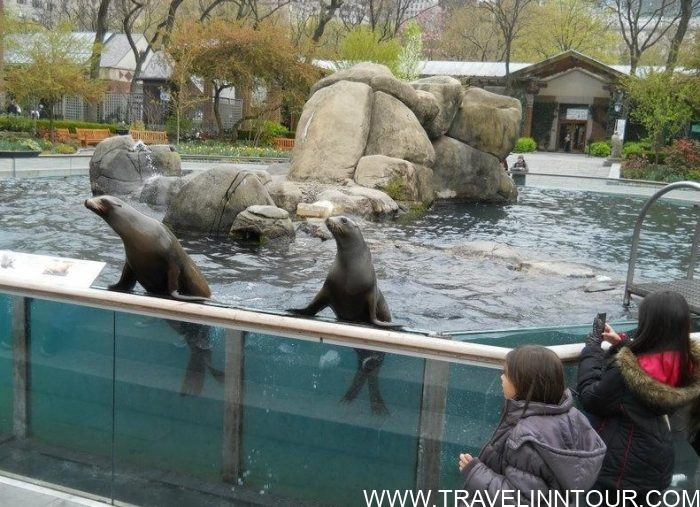 Central Park Zoo e1583439992489 - A Family Holiday in New York