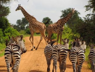 Best Places to Visit in Tanzania