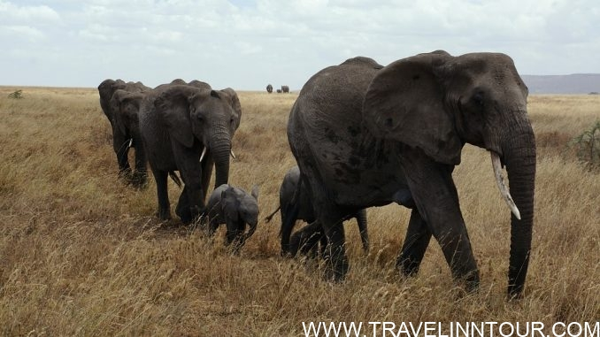 Serengeti National Park e1563080653417 - 7 Best Places to Visit in Tanzania