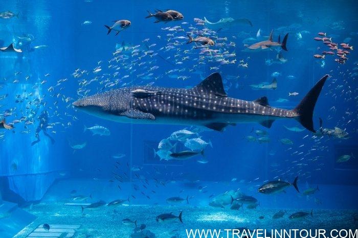 S.E.A Aquarium -