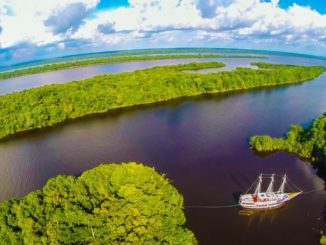 Trip To The Amazon Rainforest, Brazil