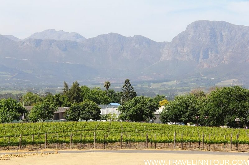 Hawke's BayVineyard e1583982805725 - Best Cities To Live In New Zealand