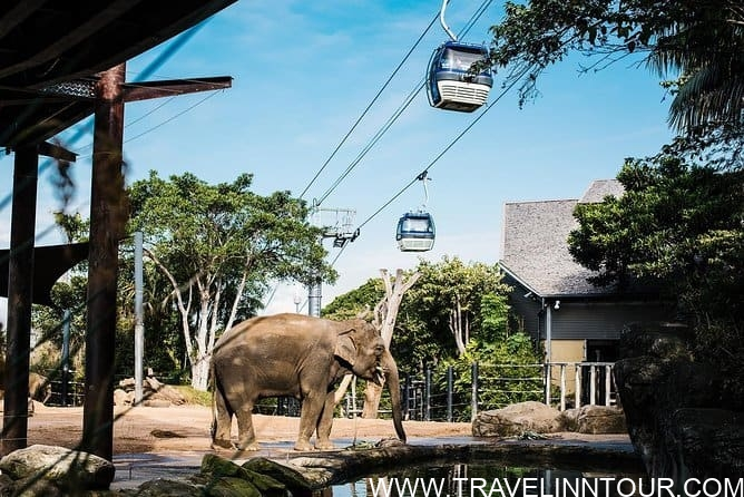 Sydney Taronga Zoo - The Ultimate Travel Guide To Sydney, Australia