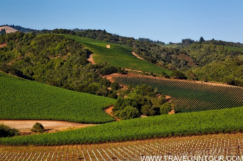 Cline Cellars Sonoma California Best Wineries In USA - 5 Best Wineries In USA To Visit - US Wine Tours