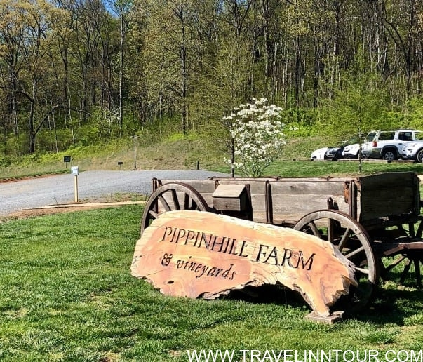 Pippin Hill Farm Vineyards - 5 Best Wineries In USA To Visit - US Wine Tours