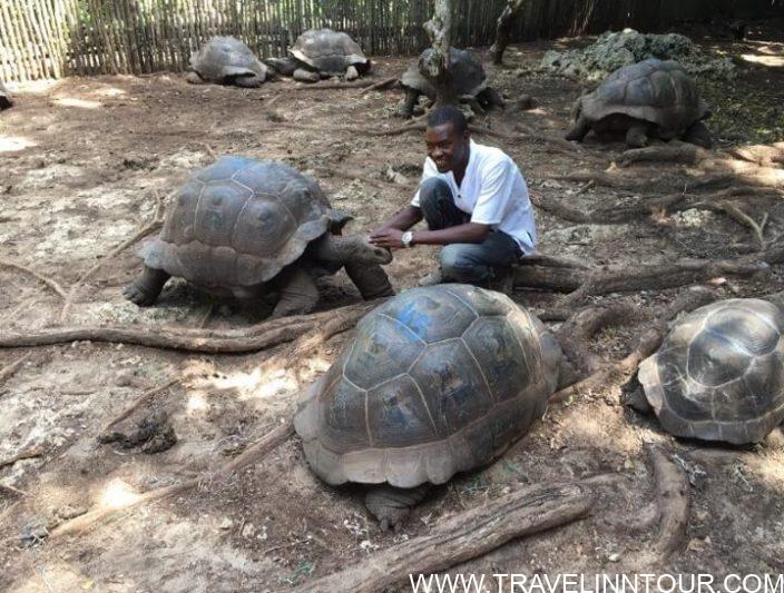 Prison Island - Stone Town, Intrigues Of The Zanzibar