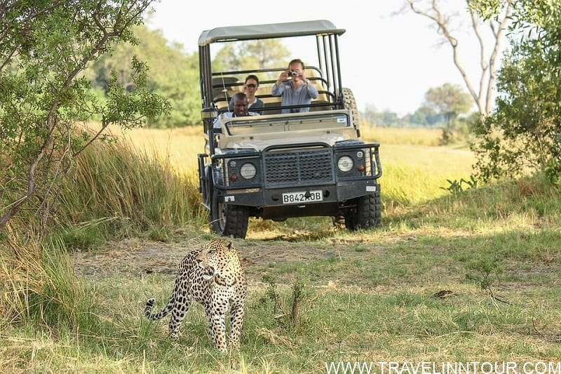 leopard safari vacation in Africa - What To Expect On A Safari Vacation In Africa