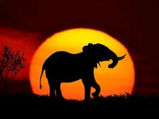 safari vacation in Africa