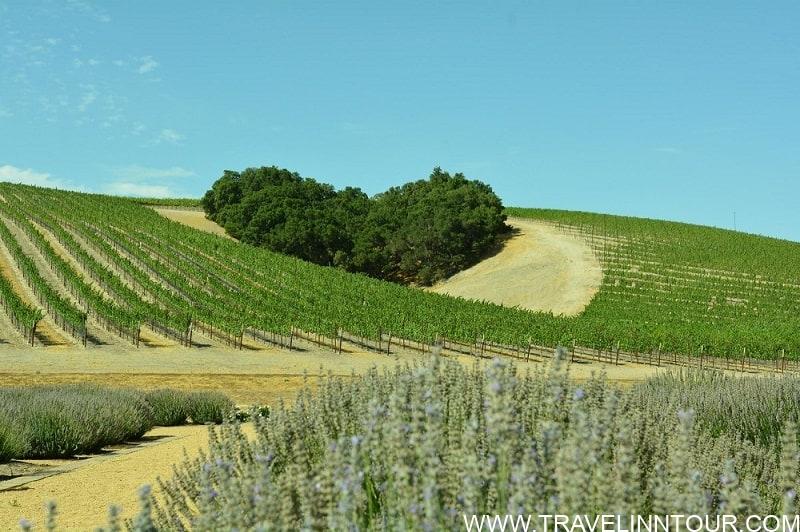 Heart Hill Paso Robles - Niner Wine Estates