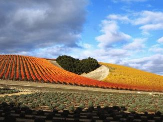 Paso Robles -Heart Hill