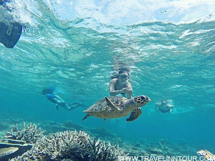 turtles excursion
