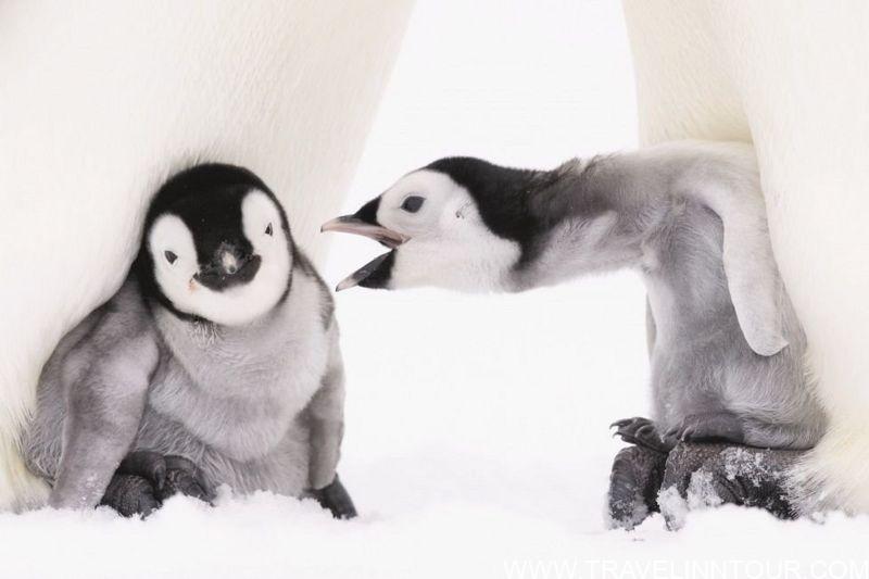 Winter in Antarctica