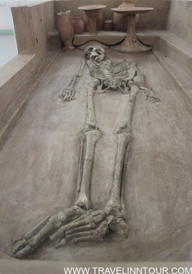 A skeleton from Rakhigarhi on display in the National Museum