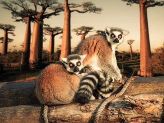 Madagascar Tourism Places To Visit In Madagascar