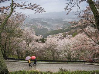 Nara Prefecture Yoshino