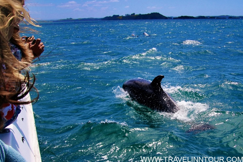Albufeira Dolphin Watching and Caves Trip