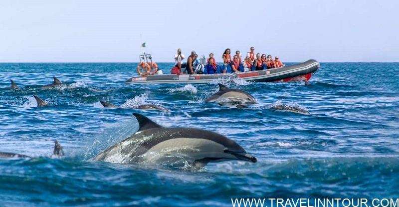 Dolphin Safaris - Albufeira Boat Tours