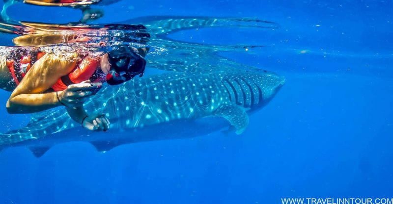 Private Swim with Whale Sharks Excursion