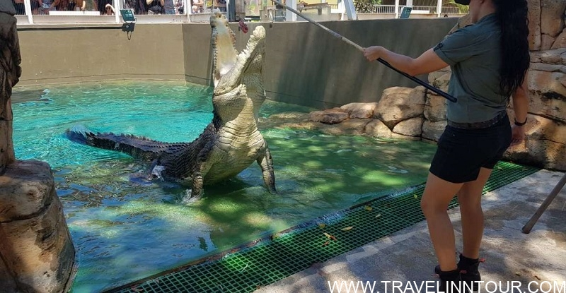 Crocosaurus Cove Best Places To Visit in Darwin NT Australia
