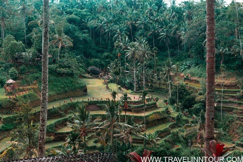 Family Attractions In Ubud Ubud Rice Terraces