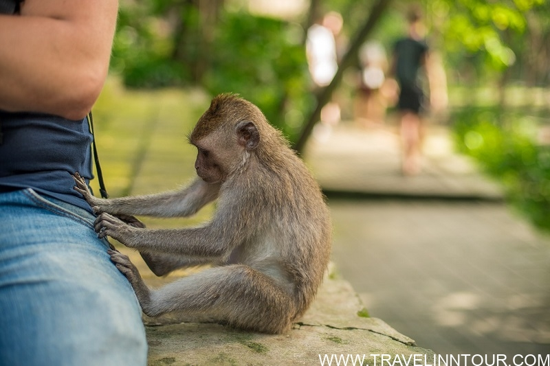 What To Do In Ubud Family Attractions In Ubud 1