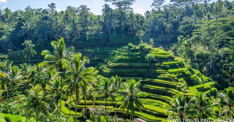 family friendly attraction Ubud in Bali